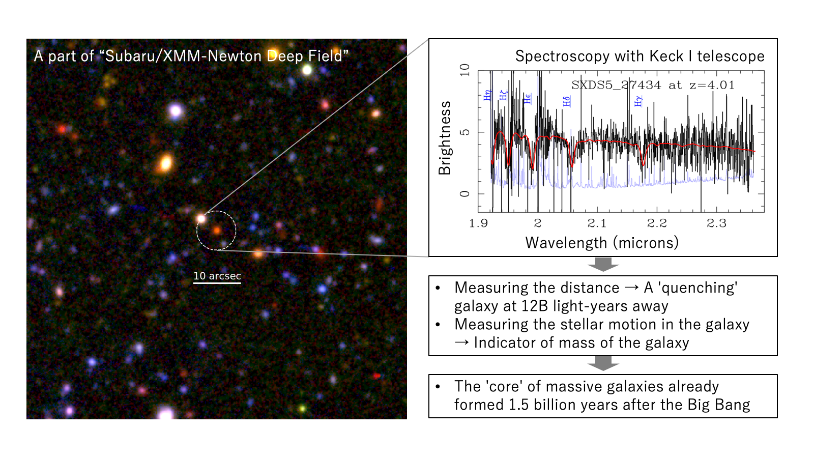 The 'Cores' of Massive Galaxies Had Already Formed 1.5 Billion Years after the Big Bang Figure2
